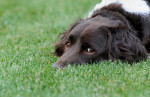 Handling dog anxiety: does my dog need Prozac?