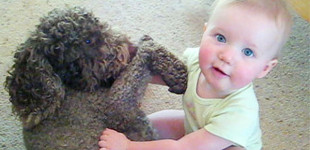 Dogs and babies living in harmony