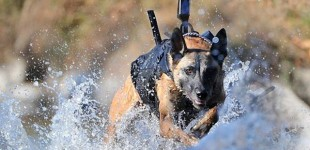 Amazing Navy Seal Dogs helped nab Bin Laden