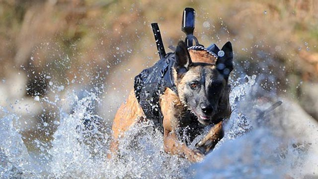 Navy Seal Dog with Protective Armor and infrared camera