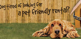 Looking for a dog friendly rental property?