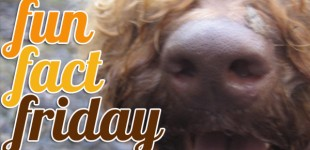 FUN DOG FACT FRIDAY: 9 facts about our k9 mates