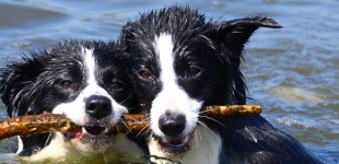 Barking Problems? Your dog doesn't think so.
