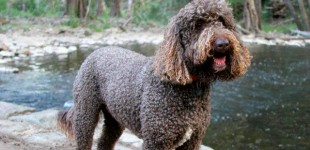 Dog Friendly Camping at Ophir, NSW