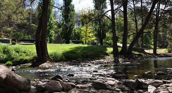 Dog Friendly Camping Nsw