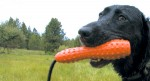 Beware of BPA & Phthalates in your dog toys!