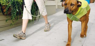 Is your dog trying to tell you something?