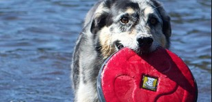 The Skinny On Dog Toys From Dog Training Experts