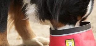 Is Kibble The Ideal Food For Your Dog? Think Again.
