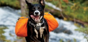 5 Tips To Promote A Healthy K9 Immune System