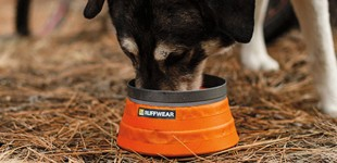 Could your dog's food be making him sick?