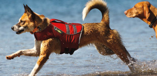 Get The Skinny on Dog Life Vests