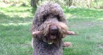 Why you should never throw a stick for your dog