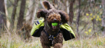 5 Canine Personas & The Toys that Make Them Tick