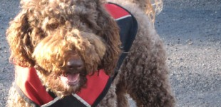Varied Diet : Healthy For You + Your Dog