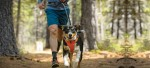 6 Ways To Make Running With Your Dog Effortless!