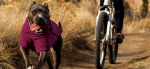 Get the best dog coat for your dog's quirks & lifestyle
