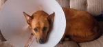 3 Comfortable Alternatives to the Cone of Shame