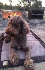 Dog Friendly Camping at Macquarie Woods NSW