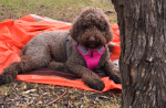 Fabulous Dog Friendly Camping at Mount Alexander, Vic