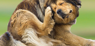 4 Ways to Stop Itchy Allergies from Driving Your Dog Bonkers!