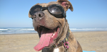 4 Quick Tips for a Sun Safe Summer with your Dog