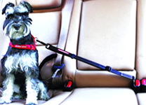 Save Your Dog & Your Money with Dog Car Restraints