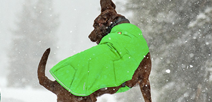 Find the winter coat that will suit your dog best