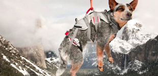 7 Pieces of Gear That Help Dogs Overcome Physical Challenges