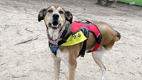 Tripod wearing Web Master Harness