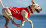 Tackling Canine Allergies: the kryptonite of the dog world