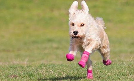 Pawks Indoor Outdoor Sport Socks