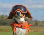 8 Purely Practical Reasons Dogs Wear Goggles